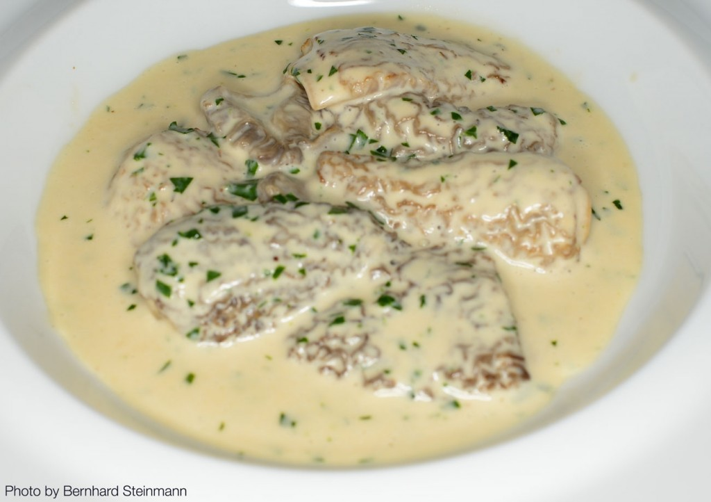 Morilles-à-la-Crème